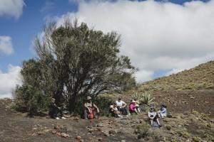 Descansando a la sombra por los paisajes del vino de Lanzarote