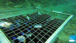 Vinos de Lanzarote en la Bodega Submarina de Canarias