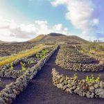Ruta-de-senderismo-por-el-paisaje-del-vino-de-Lanzarote-abril-2018-Bodegas-Guiguan