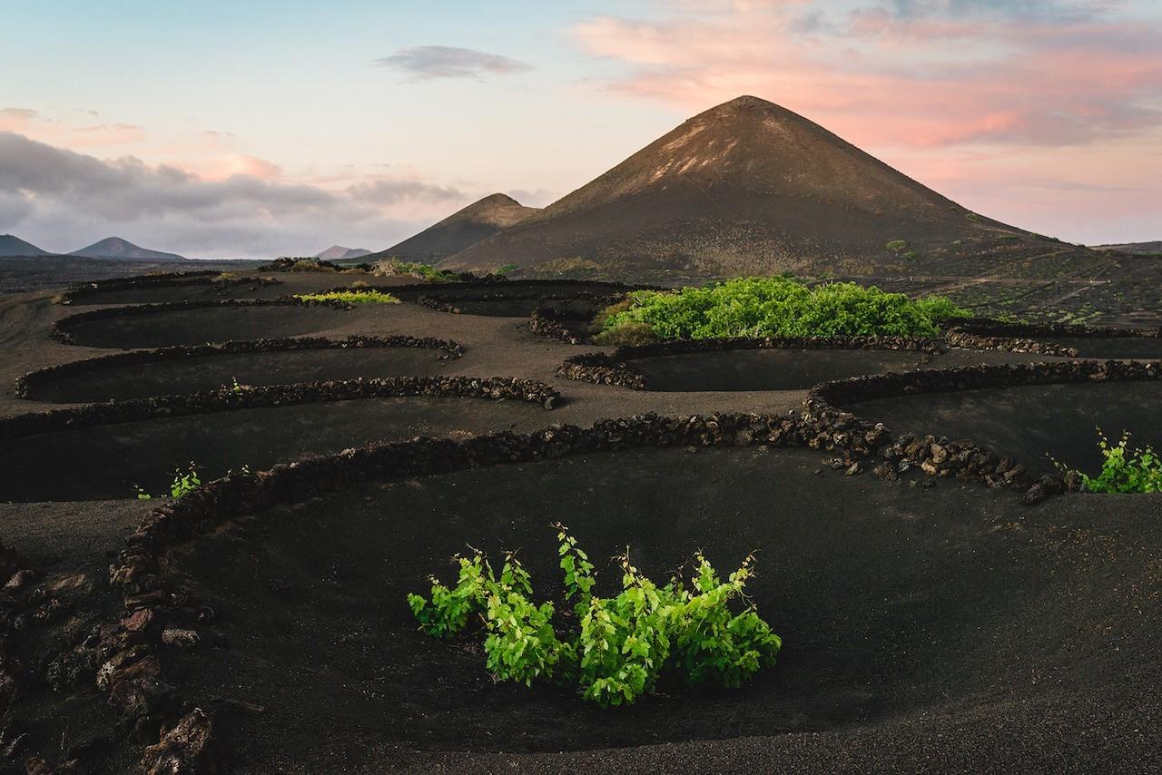 Paisaje de enoturismo Lanzarote vino entre volcanes